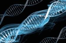 Le gène de la surdité héréditaire découvert