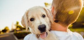 Les animaux domestiques peuvent souffrir de nos bruits