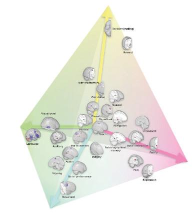 Carte des fonctions cérébrales et de la spécialisation des hémisphères