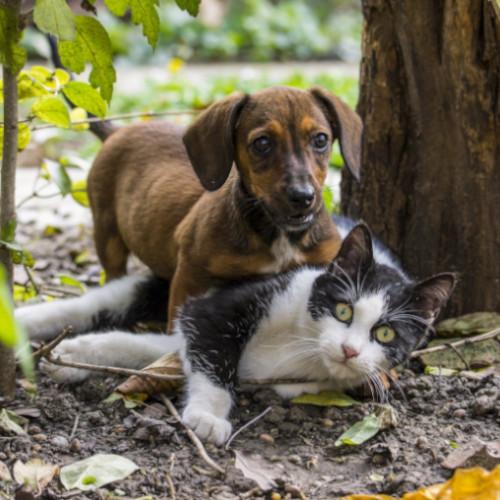 L'ouïe de nos petits amis est bien meilleure que celle de l'humain